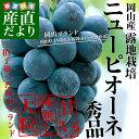 岡山県より産地直送 JAつやま  ニューピオーネ 秀品 約2キロ(4房から5房)