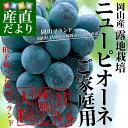 岡山県より産地直送 JAつやま  ニューピオーネ 優品 露地栽培 ご家庭用 約2キロ(4房から5房)