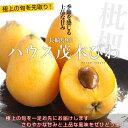 長崎県産 茂木びわ 2Lから3Lサイズ (9から12玉)市場発送品