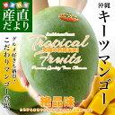 送料無料 沖縄県より産地直送 JAおきなわ キーツマンゴー 約800g 化粧箱