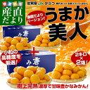 送料無料 佐賀県より産地直送 JAからつ 小粒うまか美人 高糖度みかん Sから3Sサイズ 約2キロ×2箱  U・M・K美…