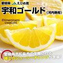 送料無料 愛媛県産 JAえひめ南 宇和ゴールド Lから2L 7.5キロ(18から22玉)