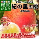 和歌山県より産地直送 JA紀の里 紀の里の桃 特秀品 約1.8キロ(6玉から8玉)桃 もも