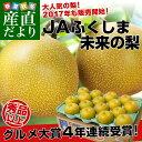 送料無料 福島県より産地直送 JAふくしま未来の梨 5キロ(10玉から16玉)