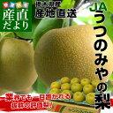 栃木県より産地直送 JAうつのみやの梨 秀品 約5キロ(8から14玉)