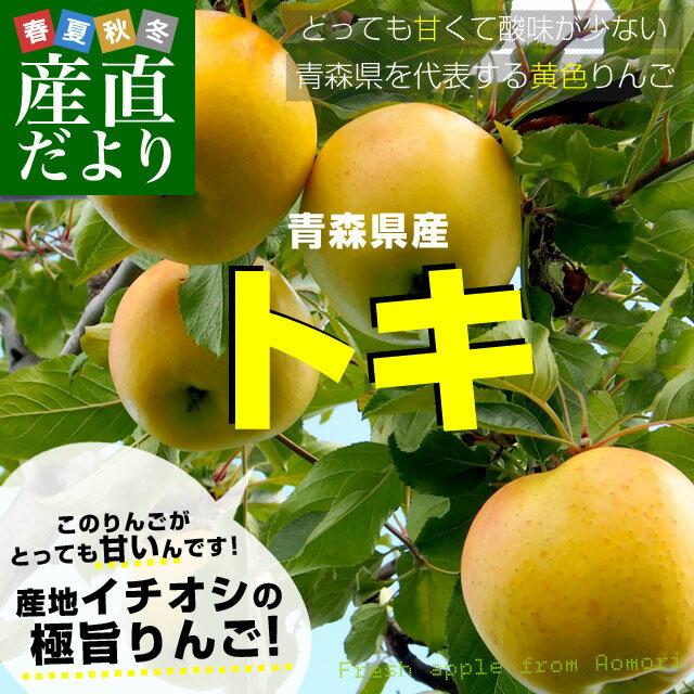 送料無料 青森県産りんご「トキ」 小玉 約10キロ(50から56玉) 市場発送