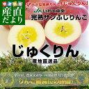 送料無料 岩手県より産地直送 JAいわて中央 完熟サンふじりんご じゅくりん 5キロ(16から23玉) 林檎 りんご…
