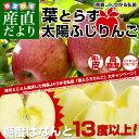 お一人様2箱まで! 送料無料 JAつがる弘前 葉とらず太陽ふじりんご 糖度13度以上 約3キロ(9から13玉) 林檎 り…