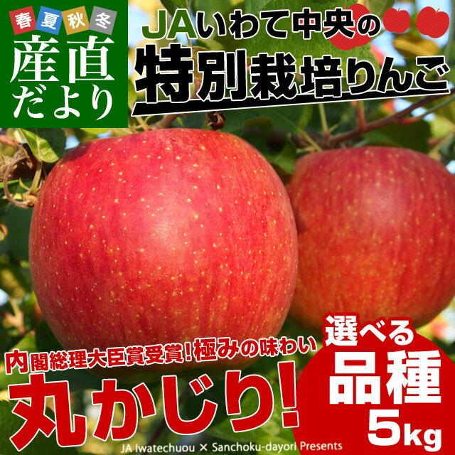 送料無料 岩手県より産地直送 JAいわて中央 皮ごとまるごと!特別栽培りんご 5キロ (14から23玉) 林檎 りんご リンゴ お歳暮 御歳暮