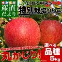 送料無料 岩手県より産地直送 JAいわて中央 特別栽培リンゴ 5キロ (14から23玉) 林檎 りんご リンゴ