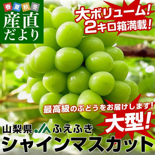 送料無料 山梨県より産地直送 JAふえふき 大型シャインマスカット 2キロ(大型650g前後×3房) ぶどう 葡萄 ブドウ
