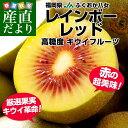 送料無料 福岡県より産地直送 JAふくおか八女 レインボーレッドキウイ 約800g (9玉)