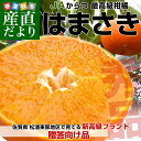 送料無料 佐賀県より産地直送 JAからつ はまさき 秀品 2.5キロ 化粧箱入(12から15玉)