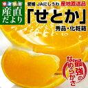 送料無料 愛媛県より産地直送 JAにしうわ せとか 秀品 Lから3Lサイズ 3キロ(10から15玉)