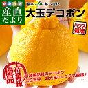 熊本県より産地直送 JAあしきた ハウス栽培 大玉デコポン (優品) 3キロ(7玉から8玉)