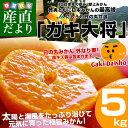 送料無料 愛媛県より産地直送 JAにしうわ 日の丸みかん ガキ大将 Sサイズ 約5キロ(約60玉) 蜜柑 みかん ミカン