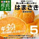 送料無料 佐賀県より産地直送 JAからつ はまさき 小玉SSサイズ 5キロ (60玉前後)
