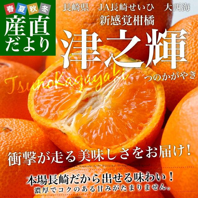 長崎県産 JA長崎せいひ 大西海 津之輝 Mから2L 5キロ (35から45玉前後)市場スポット