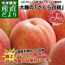 山梨県より産地直送 JAフルーツ山梨 さくら白桃 1.8キロ(5〜7玉)