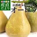 送料無料 山形県産 洋梨 オーロラ 約5キロ(8から16玉)