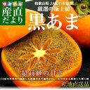 送料無料 和歌山県より産地直送 JA紀の里 黒あま 約2キロ (8から9玉)
