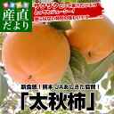 送料無料 熊本県より産地直送 JAあしきた 太秋柿 2キロ(5玉から6玉)
