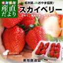 栃木県より産地直送 JAおやま スカイベリー 約300g×2P(6から12粒×2P)いちご イチゴ 苺