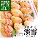 熊本県より産地直送 熊本県玉名市 淡雪(あわゆき) Lサイズ以上 約250g×2P(11から15粒×2パック入り) 苺 ※クール便