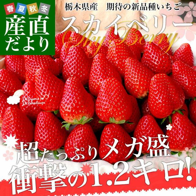 送料無料 栃木県産 話題の新品種いちご スカイベリー 超大盛1.2キロ(300g×4P・24〜48粒)(JAかみつが又は、JAおやま)いちご 苺 市場スポット ※クール便発送