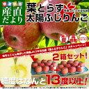 送料無料 青森県より産地直送 JAつがる弘前 葉とらず太陽ふじりんご 糖度13度以上 約3キロ×2箱(9から13玉×2箱) 林…