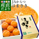 送料無料 佐賀県産 JAからつ はまさき 秀品 2.5キロ 化粧箱入(12から18玉) 市場スポット 柑橘 かんきつ