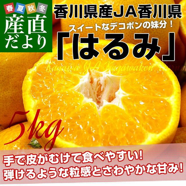送料無料 香川県産 JA香川県 はるみ Mから3L ちょっと訳あり 5キロ(12から28玉前後)