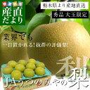 送料無料 栃木県より産地直送 JAうつのみやの梨 大玉限定 4Lサイズ以上秀品 約5キロ