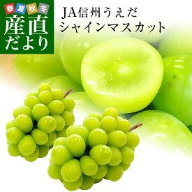 長野県より産地直送 JA信州うえだ シャインマスカット 秀品 約1.2キロ(2房から3房) 送料無料 ぶどう 葡萄 ブドウ
