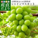 送料無料 産地直送 大型シャインマスカット 合計1.2キロ以上 (大房2房入り) 山梨県または長野県 ぶどう 葡萄