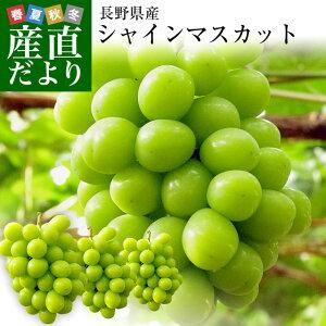 送料無料 産地直送 シャインマスカット 合計1.2キロ (2房から3房入り) ぶどう 葡萄 長野県産