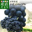 送料無料 長野県産 ナガノパープル 1.2キロ以上 (2房から3房) ぶどう 葡萄 ※クール便