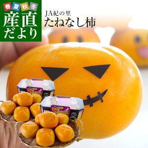 和歌山県より産地直送 JA紀の里 たねなし柿 3Lサイズ 2箱セット 合計3キロ (約1.5キロ×2箱)送料無料 カキ かき 柿