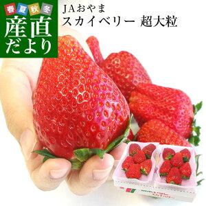 栃木県より産地直送 JAおやま スカイベリー 超大粒 1箱 300g×2P (5粒から6粒×2P) いちご イチゴ ※クール便