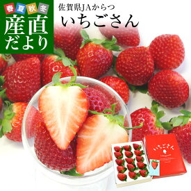 送料無料 佐賀県より産地直送 JAからつ 新品種いちご いちごさん DX 450g 15粒から18粒 苺専用箱ゆりカーゴ入り イチゴサン イチゴさん いちごサン 唐津 うまかもん