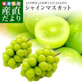 長野県産 シャインマスカット 合計1.2キロ(2房から3房) ぶどう 葡萄 JA中野市 JA信州うえだ JAながの 送料無料