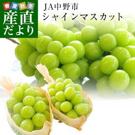 送料無料 長野県より産地直送 JA中野市 シャインマスカット 合計1.2キロ(2房から3房入り) ぶどう 葡萄