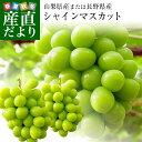遅れてごめんね敬老の日 山梨県または長野県産 シャインマスカット1.2キロ(2房から3房)送料無料 ぶどう 葡萄 種無し…