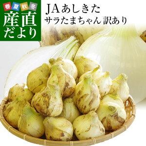 熊本県より産地直送 JAあしきた サラたまちゃん 規格外 (訳あり品) 約5キロ 送料無料 玉葱 タマネギ サラ玉 さらたま さらタマ