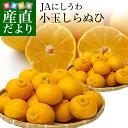 愛媛県より産地直送 JAにしうわ しらぬひ 小玉 Mサイズ 5キロ (28玉前後) 送料無料 柑橘 オレンジ 不知火 しらぬい 西…