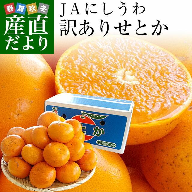 送料無料 愛媛県産 JAにしうわ 訳ありせとか 5キロ 2LからMサイズ(20から30玉前後) 市場スポット