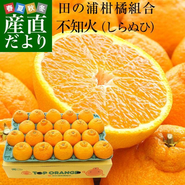 送料無料 熊本県産 田の浦柑橘組合 トップオレンジ 不知火(しらぬひ) 3LからLサイズ 5キロ (18から24玉) しらぬい 柑橘 オレンジ 市場スポット