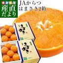 送料無料 佐賀県産 JAからつ はまさき 秀品 2.5キロ お買い得2箱セット (12から18玉×2箱) 市場スポット 柑橘 かんきつ