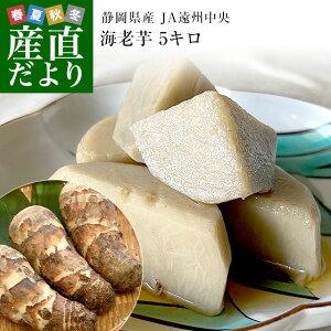 静岡県産 JA遠州中央 海老芋 2LからL 約5キロ(12から20個前後) 送料無料 えびいも エビイモ 里芋 さといも 野菜 市場発送