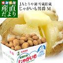 新生活応援価格 北海道より産地直送 JAとうや湖 雪蔵貯蔵じゃがいも (男爵) Mサイズ 10キロ 送料無料 芋 ジャガイモ …